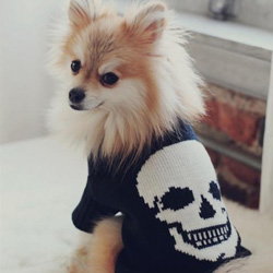 Shop Skull Dog By 360 Cashmere at Peace, Love & Decorating. FREE SHIPPING!