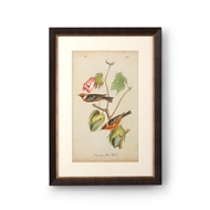 Chelsea House Wall Decor Bay Breasted Wood Warbler
