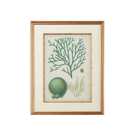 Chelsea House Wall Decor Seaweed Specimen In Green Iv 386452