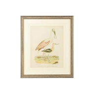 Chelsea House Wall Decor Antique Spoonbill