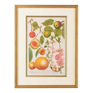 Chelsea House Wall Decor Apples No.707 386587