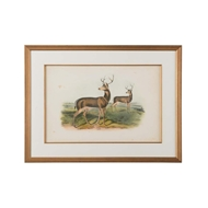 Chelsea House Wall Decor Columbian Black Tailed Deer 386670