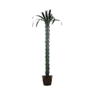 Chelsea House Home Palm Tree - Green 383719